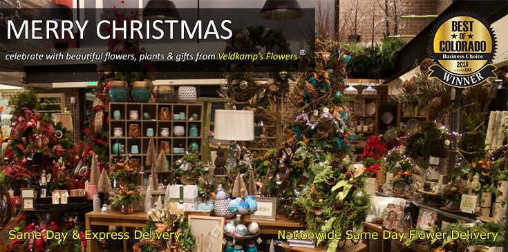 Shop Veldkamp's Flowers for the best selection of Christmas Flowers, Poinsettias, Holiday Table Centerpieces in Denver, Colorado