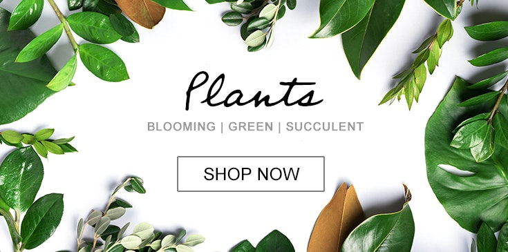 Shop Veldkamp's for the best selection of green, blooming, tropical and outdoor plants in Denver, Colorado. We offer same day or express plant delivery in the Denver area.