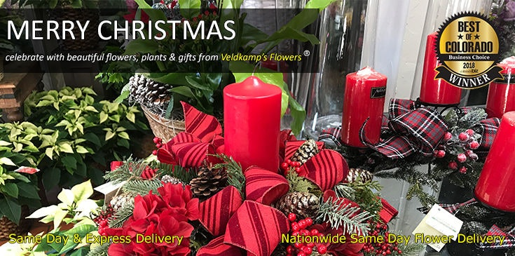 Shop at Veldkamp's Flowers for the best selection of Christmas flowers, plants and gifts in Denver, Colorado.