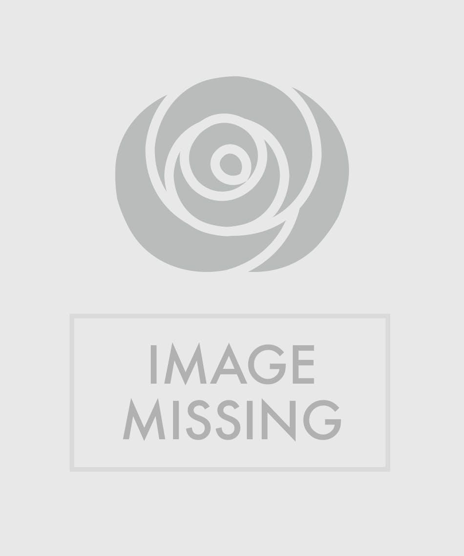 Sunny Days Kalanchoe 6 Orange Kalanchoe Plant Veldkamp S