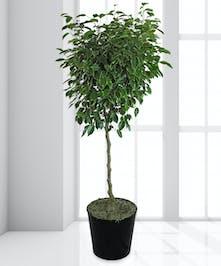 "10"" Green Floor Plant"