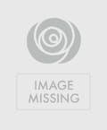 Yellow Splendor Chrysanthemum