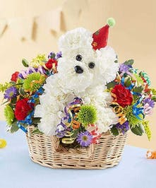 Carnation Birthday Doggie