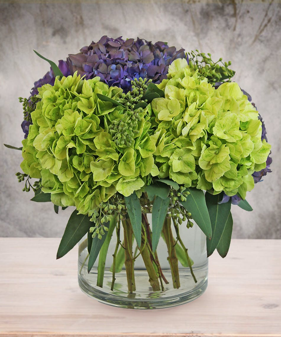 Candy apple blossoms grren purple hydrangea bouquet veldkamps candy apple blossoms grren purple hydrangea bouquet veldkamps flowers denver florist fresh cut flowers nationwide same day flower delivery izmirmasajfo