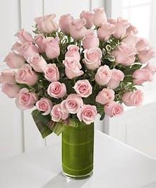 48 Long Stem Premium Roses