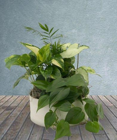dish garden, green plants
