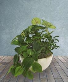 Luscious Green Plant Garden