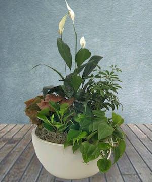 Vibrant Green Plant Garden