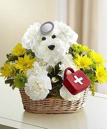 Carnation Doggie Doctor