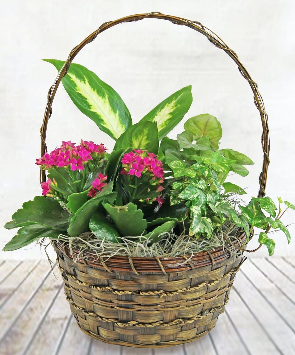 Flower Baskets Denver, Flower Baskets Denver Flower Shop