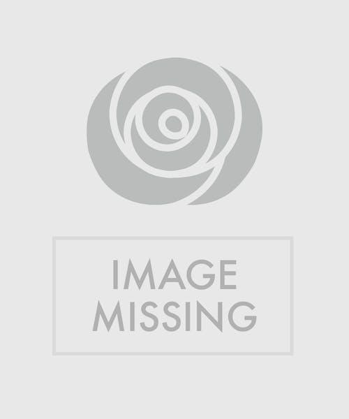 Flawless Romance Rose Bouquet
