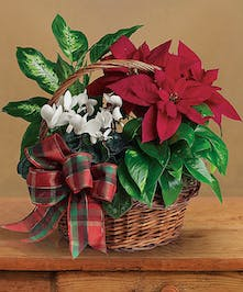 Christmas & Holiday Themed Flowering Baskets