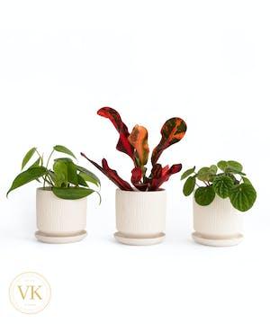 "Trio of 3"" Green Plants"