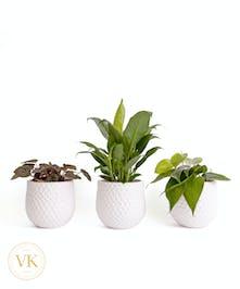 "Trio of 4"" Green Plants"