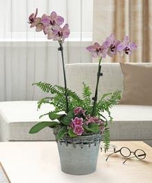 Orchid & Violet Garden