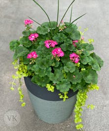 Outdoor Geranium Patio Pot