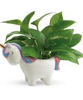 Peaceful Unicorn Pothos Plant