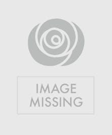 "6"" Pink Hydrangea Plant"