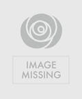 Sacha Snow Tiger