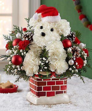1-800 Flowers Christmas Collection