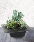 High Desert Succulent Garden