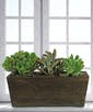 Three Succulents in Wooden Planter