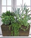 Tantalizing Succulent Garden