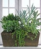 Six Succulents in Wooden Planter