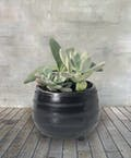 Petite Succulent Garden