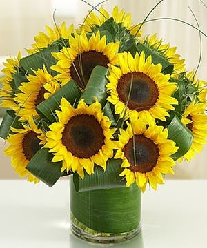 A vase full of Sunflowers.
