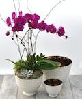 Elegant Orchid Garden