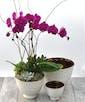 Elegant Orchid Garden - Premium